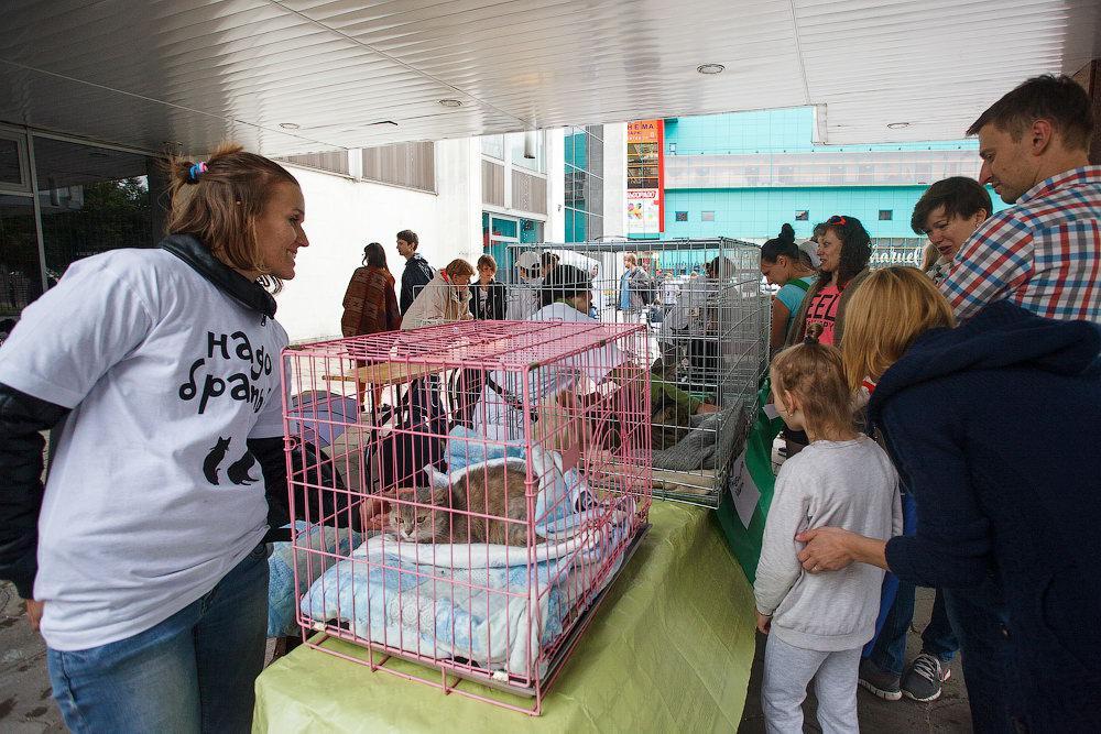 выставка животных