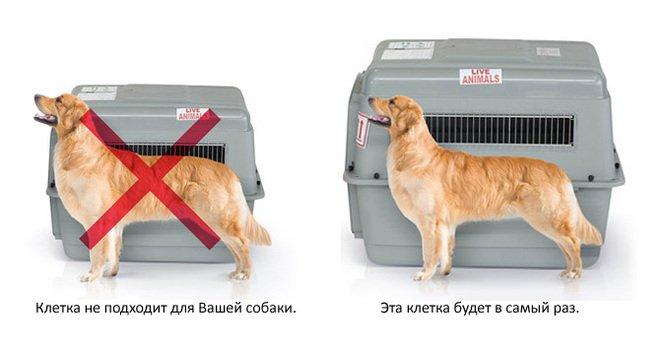 перевозка собаки